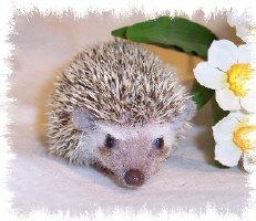Trina the Hedgehog