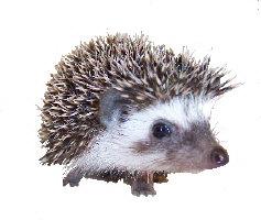 Pearl the Hedgehog
