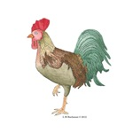 Michael Rooster