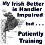 Irish Setter Agility