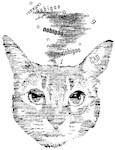TypoCat