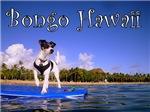 Bongo Hawaii