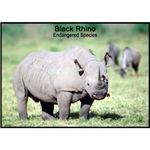 Black Rhino Rhinoceros Photo