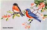 Eastern Bluebird Bird