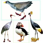 Birds Wearing Shoes Gifts
