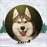 Siberian Husky & dog team