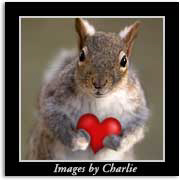 Squirrel Lovers Gifts