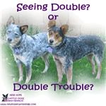 Double Trouble ACDs