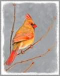 Female Cardinal Christmas Card