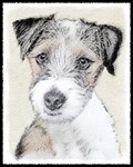 Russell Terrier (Rough)