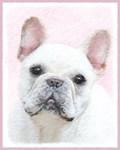 French Bulldog (Cream/White)