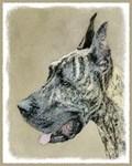 Great Dane (Brindle)