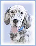 English Setter-Multiple Illustrations