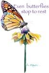 Even butterflies stop to rest