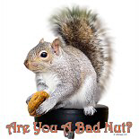 Cute Bad Nut Squirrel