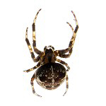 Spider T-shirts & Gifts