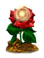 Rose & Universe