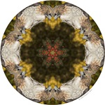 Redtail Hawk Mandalas