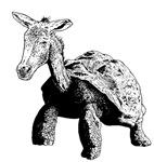 Turtle Donkey Chimera