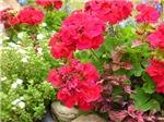 Garden Flower Photography