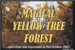 Magical Yellow Tree Forest