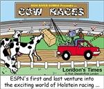Cow Races
