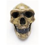 Cave Skull #2