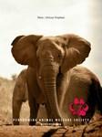 ELEPHANT NOTECARDS: sets of 10