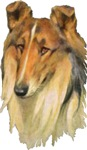 Rough Collie Gifts