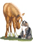 Mini Horse and Cat