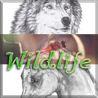 Wildlife Art & Photography