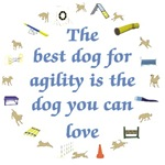 Best Dog For Agility