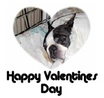 HAPPY VALENTINES DAY (BOSTON TERRIER)