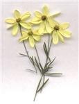 FLOWERS  (coriposi)