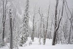 Winter's Realm