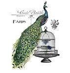 Peacock & Bird Cage