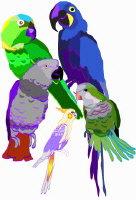 Flock O' Parrots