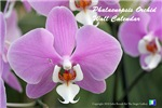 Orchid Wall Calendars