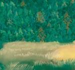 Pine Trees 6