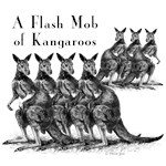 Flash Mob of Kangaroos