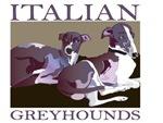 Italian Greyhounds 2