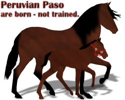 Peruvian Mare and Foal