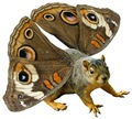 Butterfly Squirrel