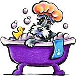 Bathtime Schnauzer