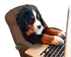 Puppy On Computer
