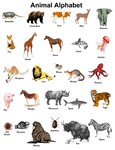 Animal Alphabet ABCs