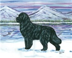 Newfoundland Snow Dog