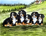 Bernese Moutain Dog Puppies