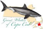 Great Whites of Cape Cod