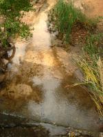 Zion Stream